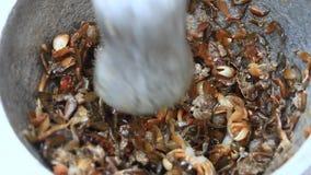 Traitement de la nourriture du shrim et du crabe par le mortier et le pilon banque de vidéos