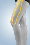 Traitement de physiothérapie avec la bande thérapeutique pour la douleur dans la jambe image stock