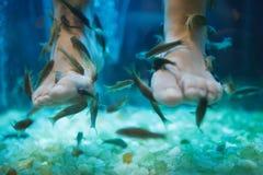 Traitement de soins de la peau de bien-être de pédicurie de station thermale de poissons Photos stock