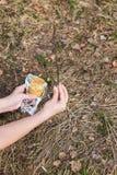 Traitement des pommiers de greffe de jardin au printemps images libres de droits