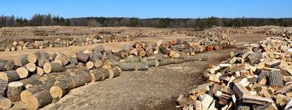 Traitement des rondins de bois dur pour le bois de chauffage une journée de printemps ensoleillée image stock