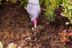 Traitement et soin du sol dans le jardin Le jardinier cultive la terre autour du buisson vert, la jeune plante photos stock