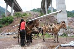 Traiter l'âne en acier photos stock