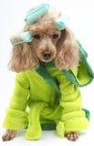 Traje y bigudíes verdes imagen de archivo libre de regalías
