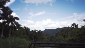 Trajet en voiture par la jungle banque de vidéos