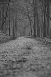 Trajeto à floresta Fotos de Stock