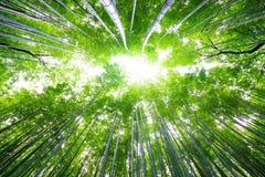 Trajeto à floresta de bambu, Arashiyama, Kyoto, Japão Imagens de Stock Royalty Free