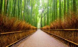 Trajeto à floresta de bambu, Arashiyama, Kyoto, Japão Foto de Stock Royalty Free