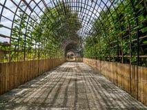 Trajeto à floresta de bambu, Chiang Mai, Tailândia imagem de stock royalty free