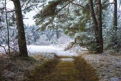 Trajeto abandonado através de uma floresta nevado Fotografia de Stock Royalty Free