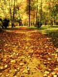 Trajeto adiantado do parque do inverno Imagem de Stock Royalty Free