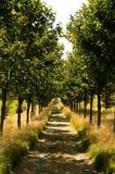 Trajeto alinhado árvore Fotos de Stock Royalty Free