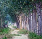Trajeto alinhado árvore Fotografia de Stock Royalty Free