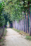 Trajeto alinhado árvore Foto de Stock Royalty Free