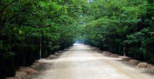 Trajeto alinhado árvore Fotografia de Stock