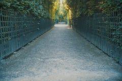 Trajeto alinhado árvore em um parque Imagens de Stock