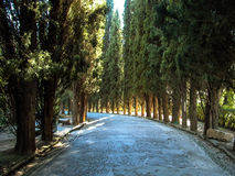 Trajeto alinhado árvore Granada, Espanha Imagem de Stock