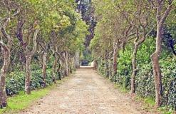 Trajeto alinhado árvore, outono, cores da queda Imagem de Stock Royalty Free