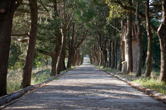 Trajeto alinhado com árvores Imagem de Stock Royalty Free
