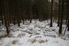 Trajeto ao bosque do pinho com neve Imagem de Stock Royalty Free