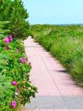 Trajeto ao mar - ao longo das plantas verdes Foto de Stock Royalty Free