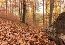 Trajeto através da floresta 2 Imagem de Stock Royalty Free