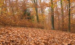 Trajeto através da floresta 4 Imagens de Stock