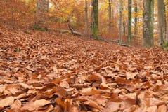 Trajeto através da floresta 3 Fotos de Stock Royalty Free