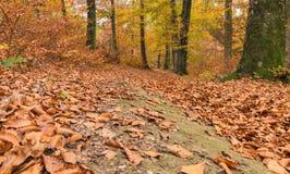 Trajeto através da floresta 1 Imagens de Stock
