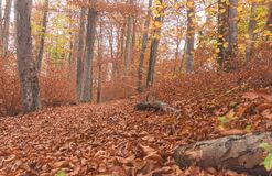 Trajeto através da floresta 7 Foto de Stock Royalty Free