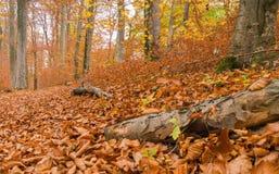 Trajeto através da floresta 8 Imagens de Stock
