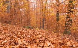 Trajeto através da floresta 5 Foto de Stock Royalty Free
