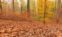 Trajeto através da floresta 9 Imagem de Stock Royalty Free