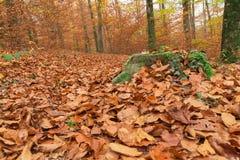 Trajeto através da floresta 6 Imagem de Stock Royalty Free