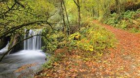 Trajeto através da floresta. Imagens de Stock Royalty Free