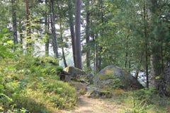 Trajeto através da floresta Imagem de Stock Royalty Free