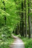 Trajeto através da floresta foto de stock