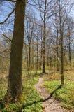 Trajeto através da floresta Imagens de Stock