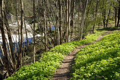 Trajeto através da floresta ao lado do Salmon River Tovdalselva, em Kristiansand, Noruega imagem de stock