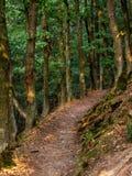 Trajeto através da floresta ao longo da fuga de Rheinsteig em Alemanha imagem de stock