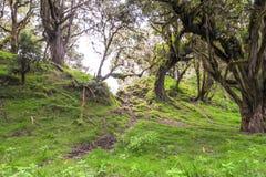 Trajeto através da floresta com as árvores cobertas com os líquenes e os epiphytes na floresta úmida da montanha de Tanzânia imagens de stock