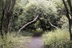 Trajeto através das árvores Foto de Stock Royalty Free