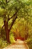 Trajeto através das madeiras Fotografia de Stock