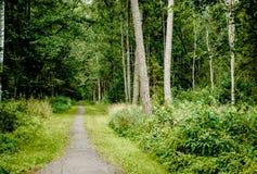 Trajeto através de uma floresta Imagens de Stock