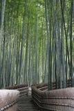 Trajeto através de uma floresta de bambu imagem de stock royalty free