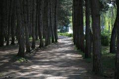 Trajeto através do bosque conífero Pyatigorsk, Rússia Foto de Stock Royalty Free