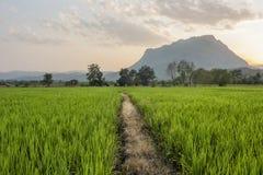 Trajeto através dos campos do arroz Foto de Stock Royalty Free