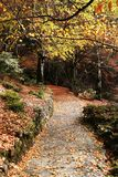 Trajeto bonito do outono Fotos de Stock Royalty Free