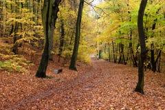 Trajeto bonito do outono na floresta com folhas e as árvores coloridas imagens de stock royalty free