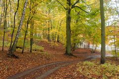 Trajeto bonito do outono na floresta com folhas e as árvores coloridas fotografia de stock
